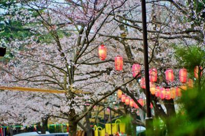 音信不通の友を求めて二万歩の旅 ついで立ち寄る綱島桜祭り3月30日9時半より ベビームーバーの年金収入