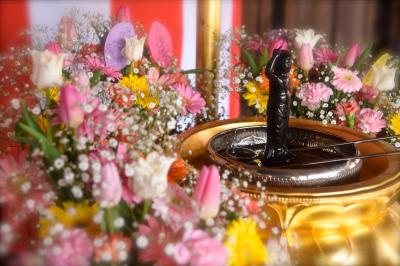 ひとりお花見部 2018⑥ 花まつりは花御堂探し 三十三間堂~智積院~マルシン飯店 四日め前半篇
