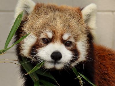 甲府市遊亀公園附属動物園 遊亀の魅力上昇中!! 肩肘張らない感じがとても嬉しいクゥちゃんとホクト君の同居
