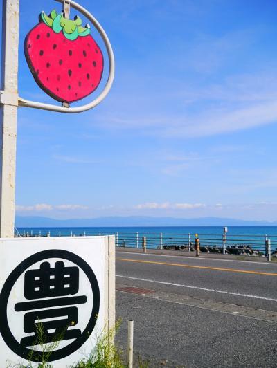 苺!イチゴ!!いちご!!!@富士川SA*マル豊苺園*三保の松原