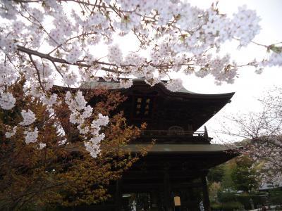 鎌倉散歩~ソメイヨシノ満開までもう少し!