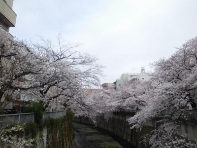 東京2019桜 【1】神田川&外堀通り(法明寺~面影橋~江戸川橋~外堀通り)