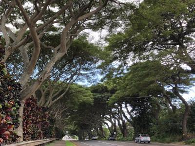 ハワイ旅 6日目 マウイ島路線バスで島一番の観光地ラハイナへ