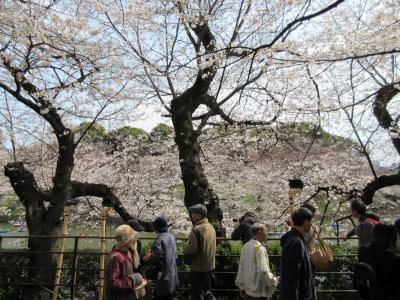 千鳥が淵、桜と人、人