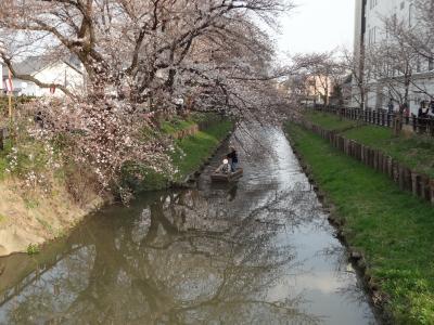 川越 散策・食べ歩き 満開の桜には少し早かった~