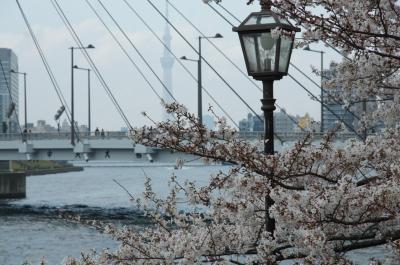 20190331-3 築地 ターレットさん、いつもの → 勝どきから佃まで隅田川散歩