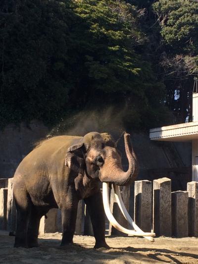 金沢動物園へ行ってみた