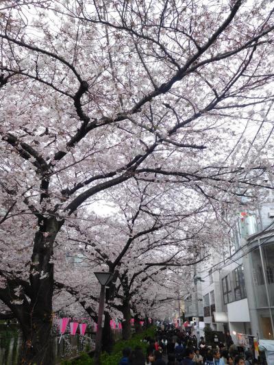 東京2019桜 【3】目黒川