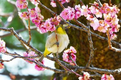 いざ!春の中部地方へ白川郷・名古屋の旅Ⅱ~名古屋編~