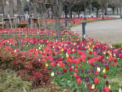 2019、3月25日 グランドニッコー東京 台場 エグゼクティブルーム、母と妹2人の4人で泊まります