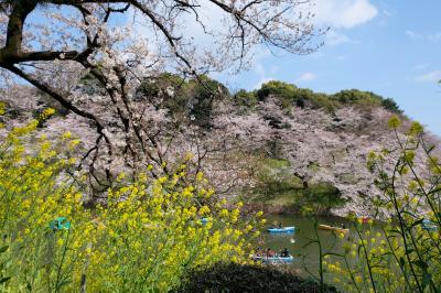千鳥ヶ淵の2019桜祭り