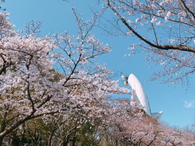 花見に大阪へ② in万博公園