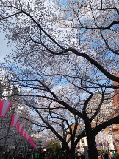 東京2019桜 【5】播磨坂