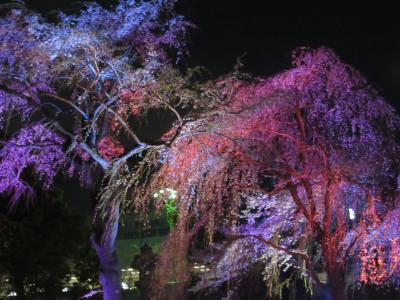 千鳥ヶ淵と品川の桜