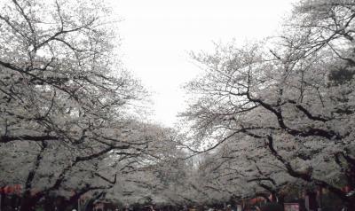 2019年 3月晦日 桜観賞④