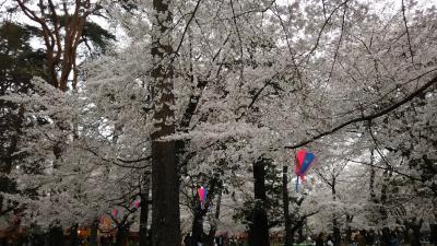 大宮公園花見旅、2019