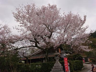 気の早い桜散歩in京の春。