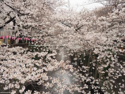 ♪平成最後のお花見♪@目黒川