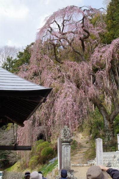 春の奥多摩を散策