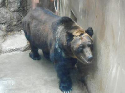 2019年 3月晦日 上野動物園・・・・・①東園