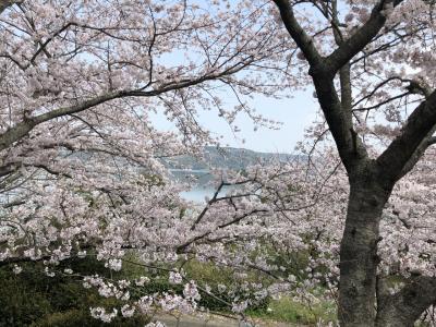 隠れた桜の名所にちょっと行ってきました。