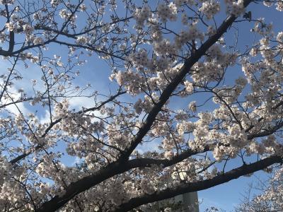 祝☆令和記念☆桜祭りのその前に☆