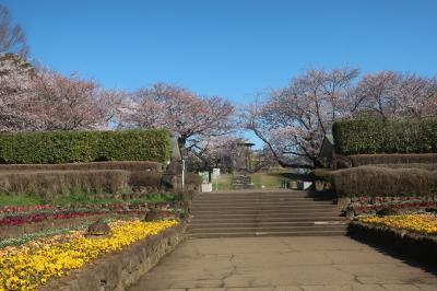 2019年 県立四季の森公園 桜
