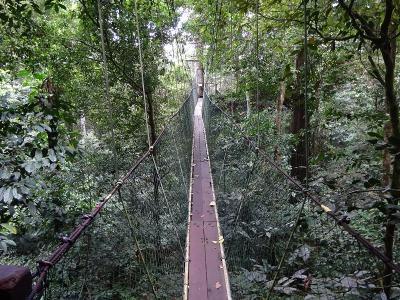 グヌン・ムル国立公園~コタキナバル(ボルネオ島:マレーシア) 2019.3.20