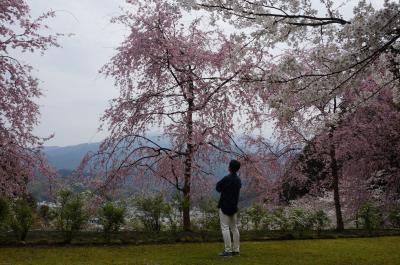 愛媛と香川でお墓参りと花見と温泉と (3) 宇和島で鯛めし・じゃこ天