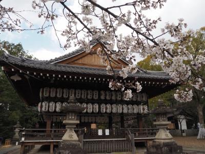 向日神社の桜は7分咲き