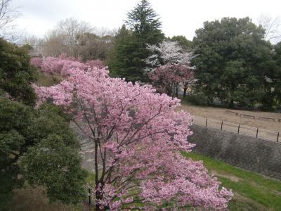 新元号発表の日・国営昭和記念公園で桜を見る女子会