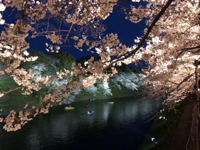 「平成」から「令和」皇居乾通りの桜と千代田さくら巡り