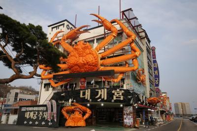 2019年3月エアプサンで行く韓国・盈徳、安東、大邱、釜山の旅(1)盈徳でズワイガニを食べてきました。