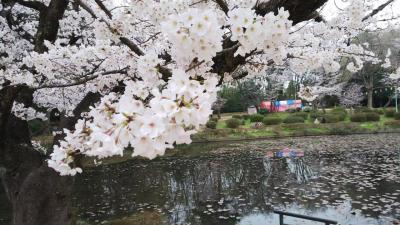 桜、岩槻城址公園。おまけ美術館。