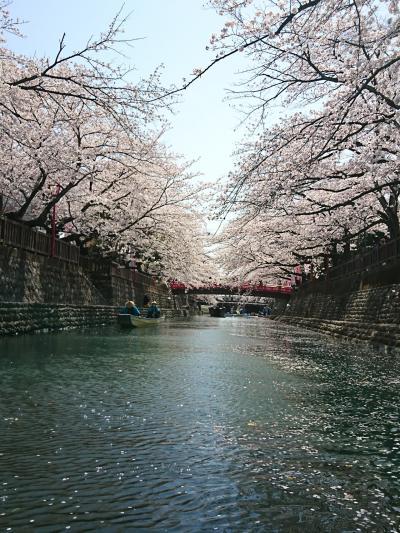 桜巡りと酒蔵~水の都、大垣~