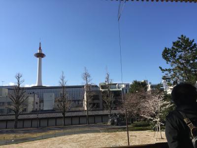 寒い京都桜歩き 東本願寺-西本願寺-二条城-御所-錦市場-懐石近又