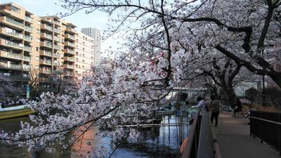 勝どき、月島から隅田川沿いに御花見しました。上がりは銀座。
