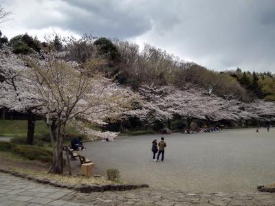 満開の桜の樹の下で、平成から令和へ