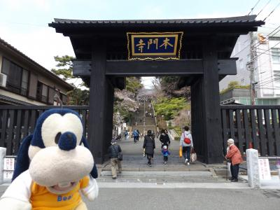 グーちゃん、平成最後の花見へ行く!(池上本門寺、坊主の正体!?編)
