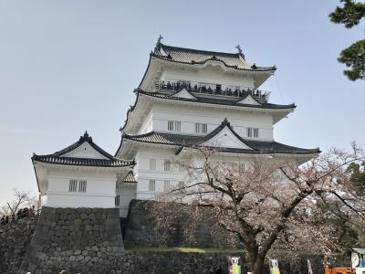 さわやかウォーキング「歴史、味、桜にふれる春の小田原」&日本100名城スタンプ集め
