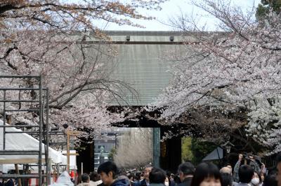 靖国の御霊に新元号「令和」の報告と「令和」の時代も平和が続くことを願って靖国神社へ 桜満開 2日3日4日夜薪能