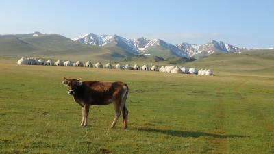 キルギス・アドベンチャー(5)エーデルワイスいっぱいのソン・クル湖畔