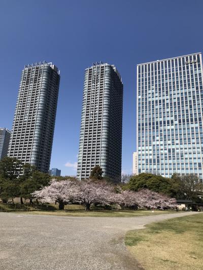 浜離宮恩賜公園ー桜の木が少なくてお花見には残念でした