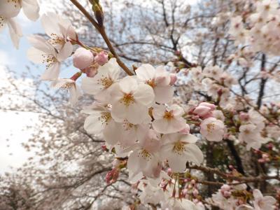 今年のお花見は砧公園で ~ラトリエ・ドゥ・プレジールのパンとワインと共に~