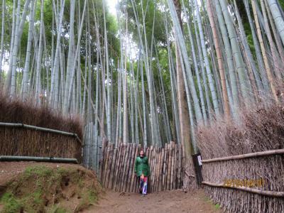 懐かしの京都・春の色はもう少し。