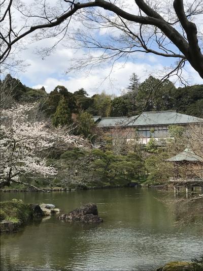 花を求めて⑧おどり花見の成田山