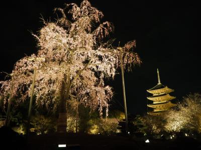 大阪ベースの京都観光2泊3日桜を求めて 1日目
