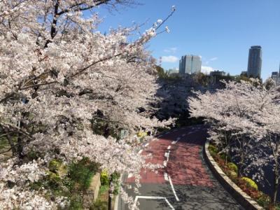 六本木界隈桜散歩