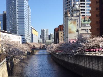 目黒川桜散歩