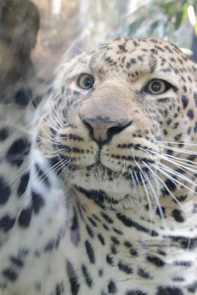 福岡長崎レッサーパンダ遠征5泊4園めぐり(11)福岡市動物園(後編)地元のファンさんの案内で見学できたさまざまな動物たち